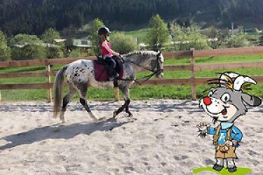 Pferdefans aufgepasst!